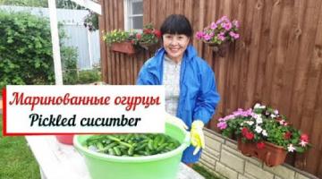 Маринованные огурцы. Pickled cucumber. Засолка огурцов ночью.